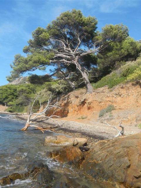 Paradies am Strand von Porquerolles