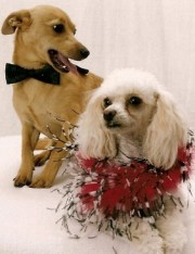 Feathered dog collar and bow tie dog collar