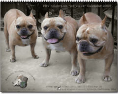 French Bulldog Village Calendar Cover