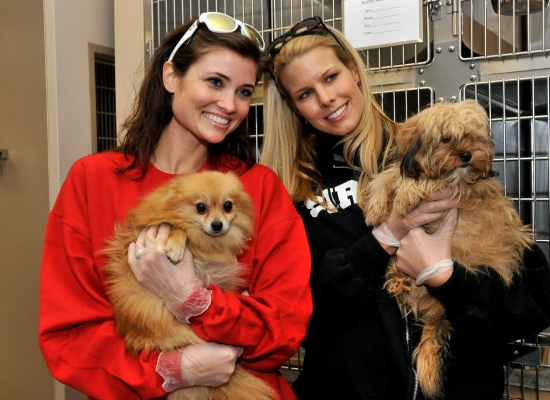 """Cassandra DiPietro, wife of NHL hockey player Rick DiPietro, and Beth Stern, wife of Howard Stern, hold two of the 150 dogs that arrived Wednesday at the North Shore Animal League. """"OMG u guys, it's just like getting a puppy from a pet store! Let's get all our friends one for Christmas""""."""