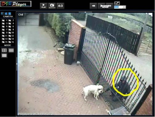 French Bulldog theft in England