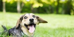 magnesium for dogs electrolytes for dogs