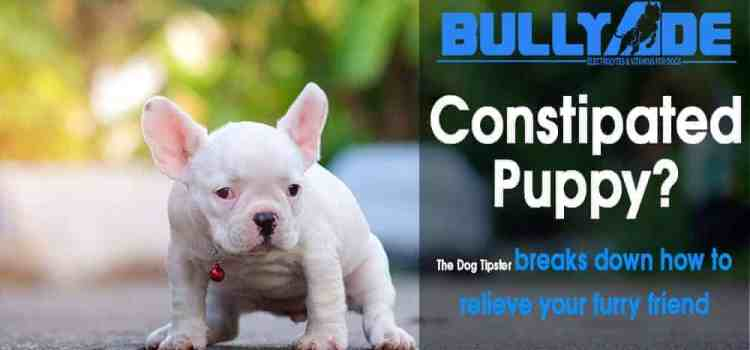 how to help a constipated puppy