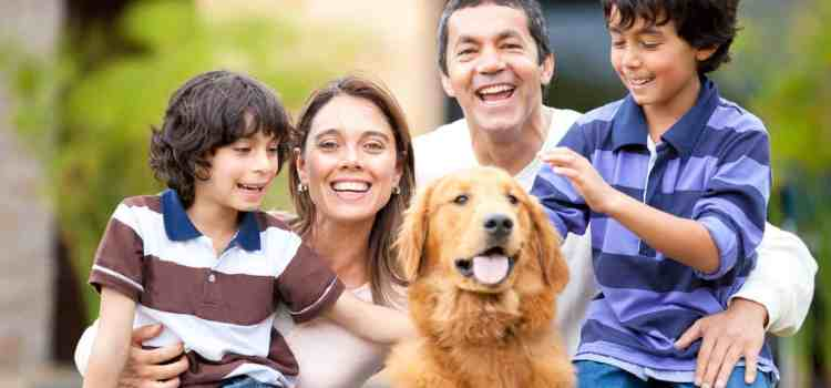 how to introduce a dog to a new family or home