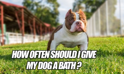 how often should i give my dog a bath