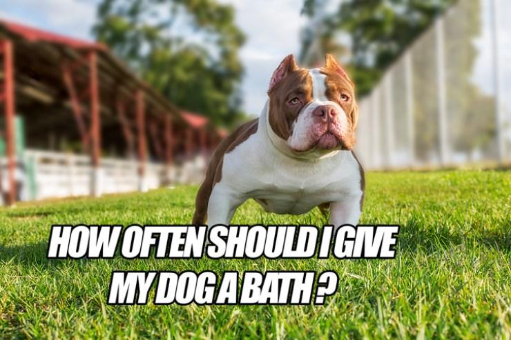 How Often Do I Give My Dog A Bath