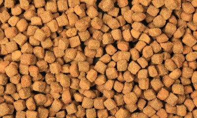 high protein dog food diet