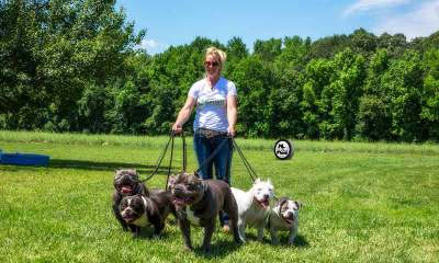 Can Bully Breed Dogs Do Agility Training