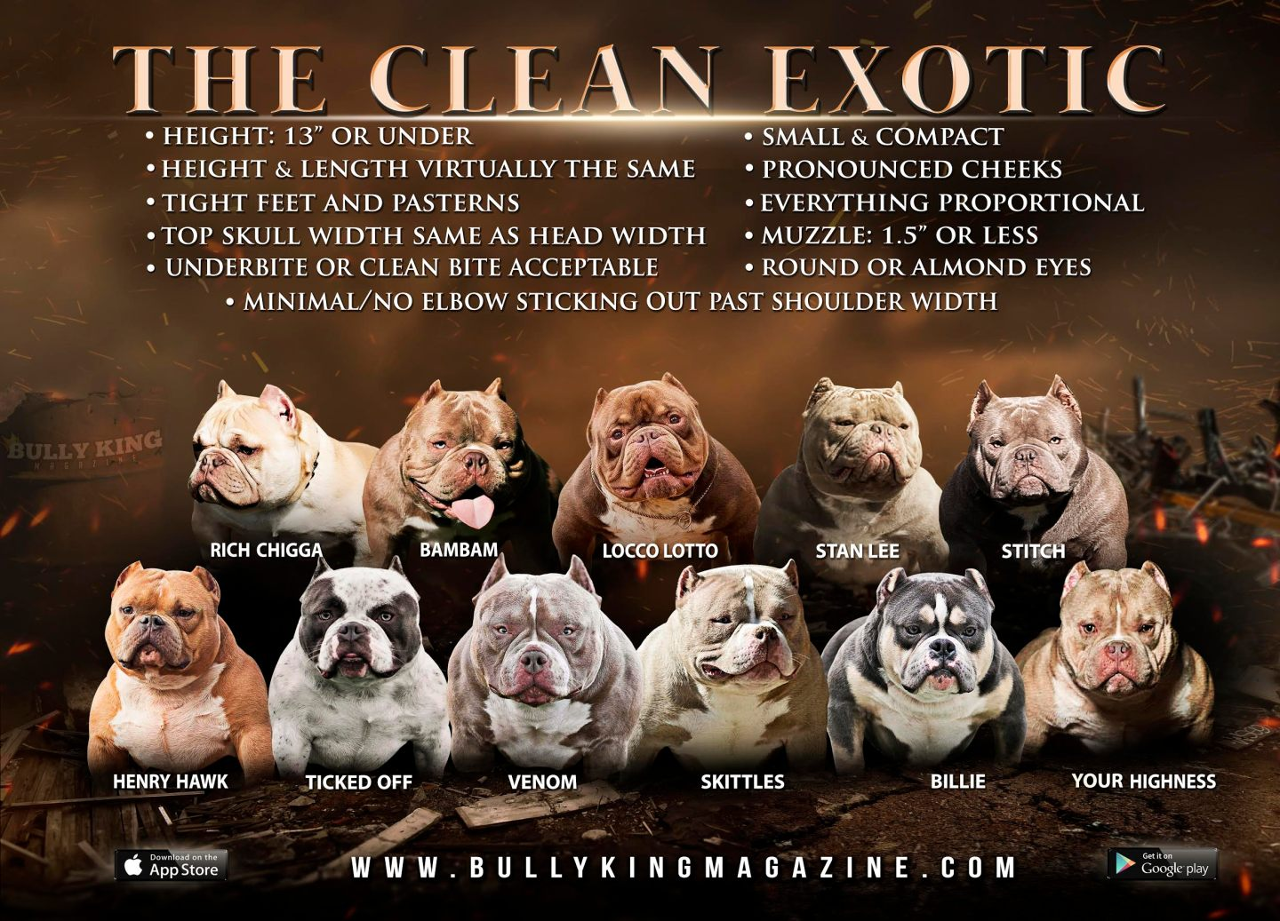 What Is An Exotic Bully Whats A Clean Exotic Bully
