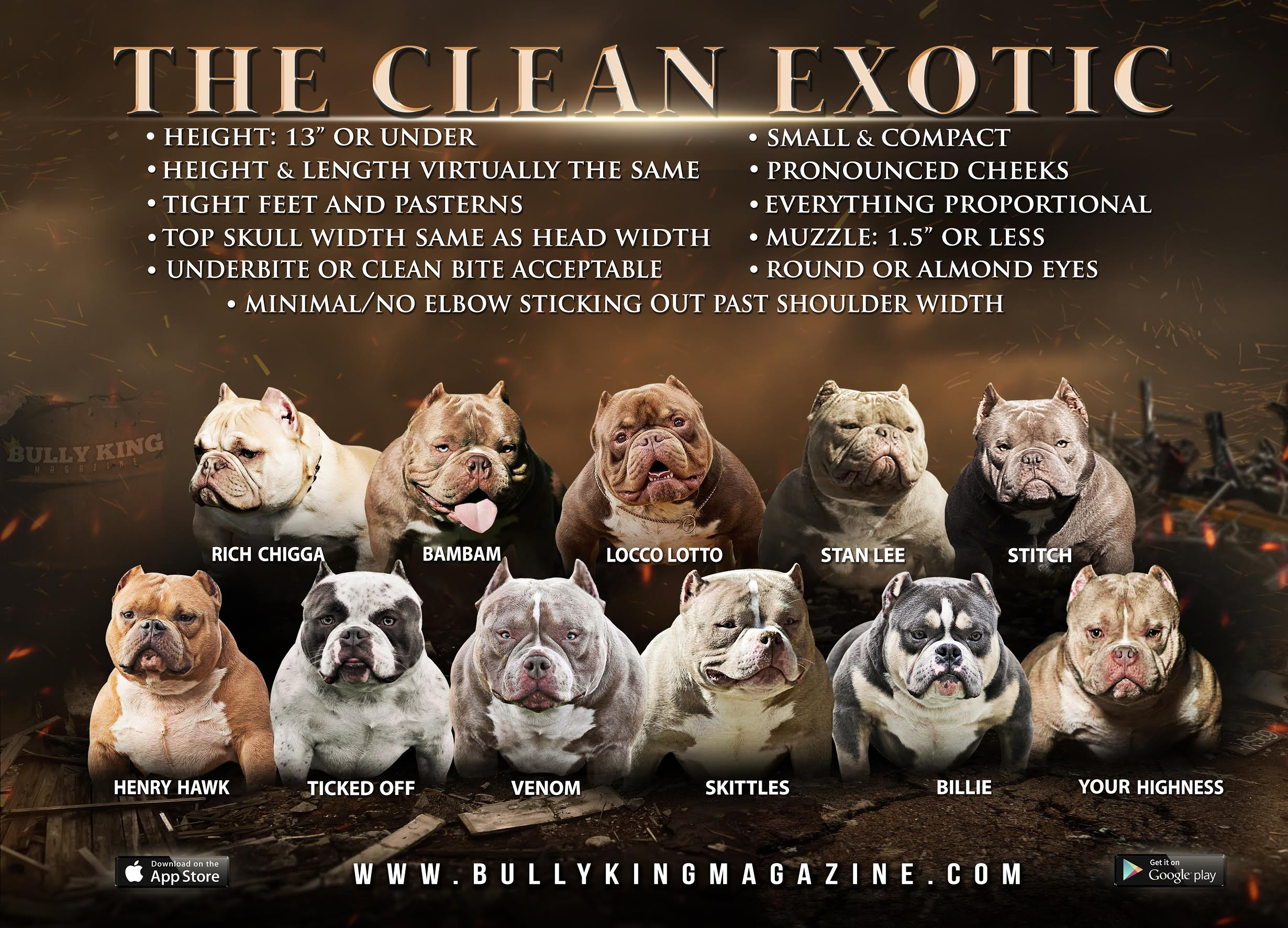 What Is An Exotic Bully & What's A