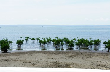 Mangrove reforestation in San Vicente shoreline