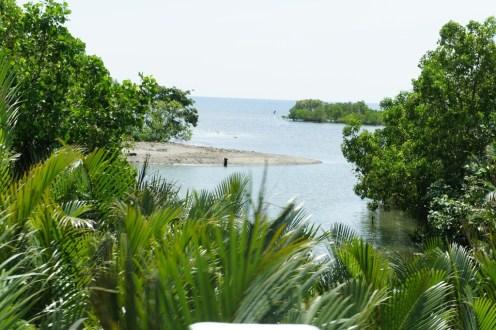Bridge view of mangrove and nipa groves