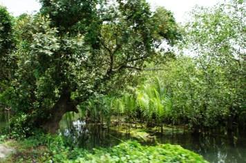 Mangrove and Nipa groves