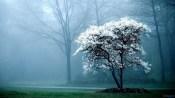 early_morning_fog-1920x1080
