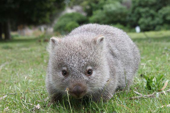 http://www.tabonito.pt/os-40-animais-bebes-mais-adoraveis-que-ja-viste