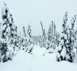 Chasing the Northern Lights: Not The Only Reason To Go To Alaska In January