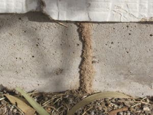 evidence of termites
