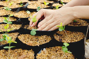 seedlings in containers, lined up on a table