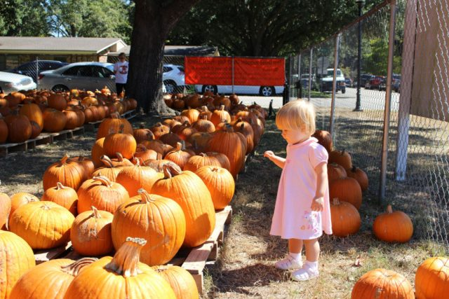 pumpkinchoosemaybe1