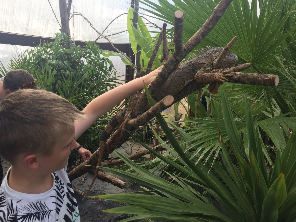 A Visit to the National Reptile Zoo, Gowran, Co. Kilkenny