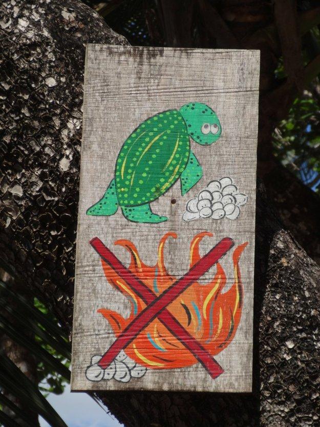 Auch an diesen Strand scheinen die Schildkröten zu kommen