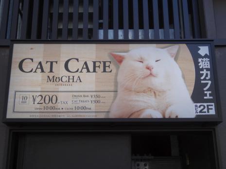 In diesem Cafe gibt es Katzen die frei umher laufen