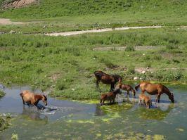Kirgistan_073