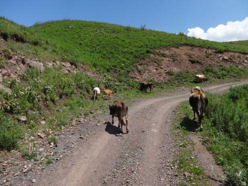 Kirgistan_084