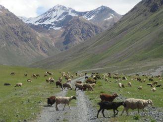 Kirgistan_166