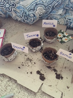 Name and decorate the plants.
