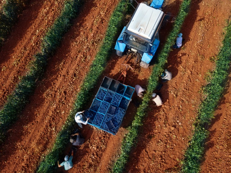 Lucratorul agricol