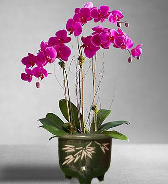 Rangkaian Bunga Anggrek Bulan Segar dan Artificial untuk