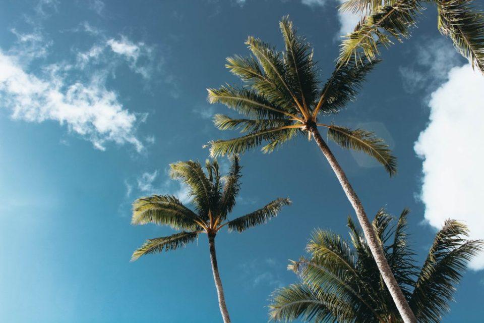 green palm trees blue skies