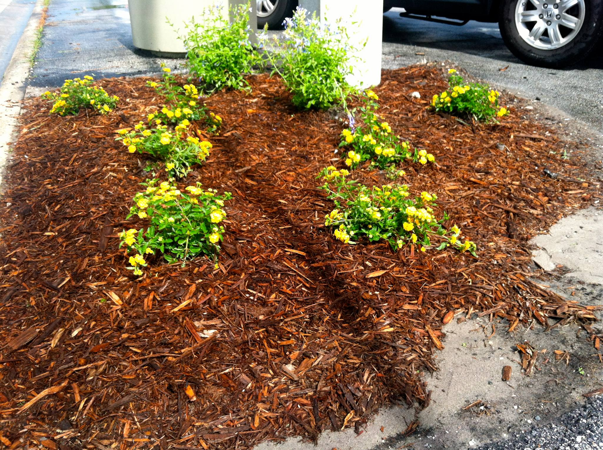 Garden of the Day: Guerilla Gardening in Audubon Park - bungalower