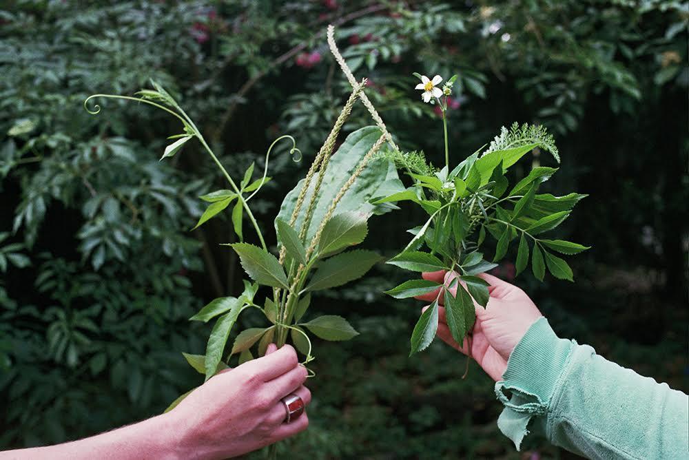 Florida Gardening & Herbalism Program - bungalower