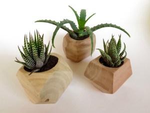 Cactus Homeware