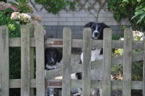 honden in bungalowapark markant