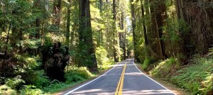 Avenue of the Giants NoCal
