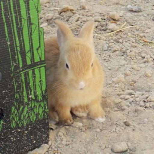 http://bunniesmatter.org/wp-content/uploads/2017/02/cropped-Cream_opt-1.jpg