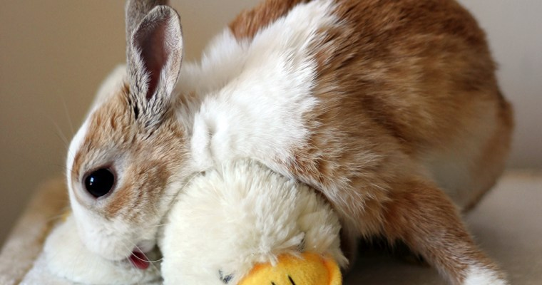 28 Lifesaving Bunny Facts