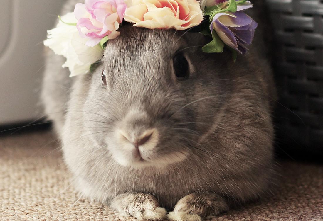 Bunny-Savvy Vet list