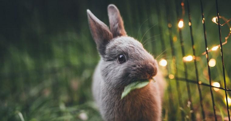 Habitats & Bunny-proofing