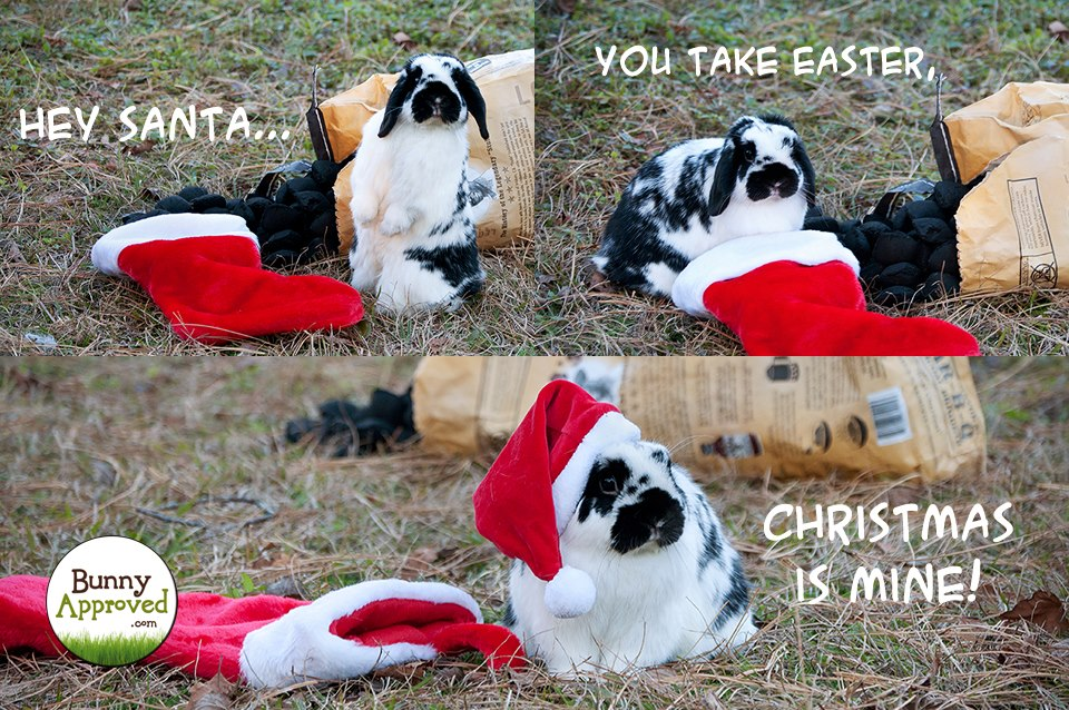 Bunny Memes  Bunny Approved  House Rabbit Toys Snacks