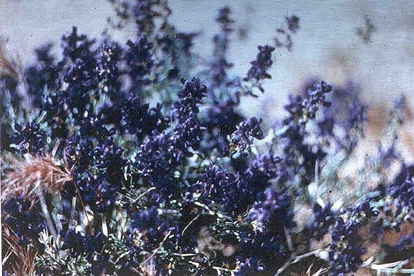 indigo color of the month