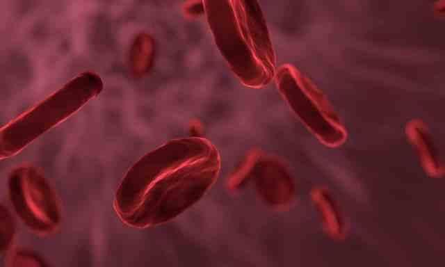 https://www.maxpixel.net/Blood-Bacteria-Microbiology-Biology-Cell-3188223 blood