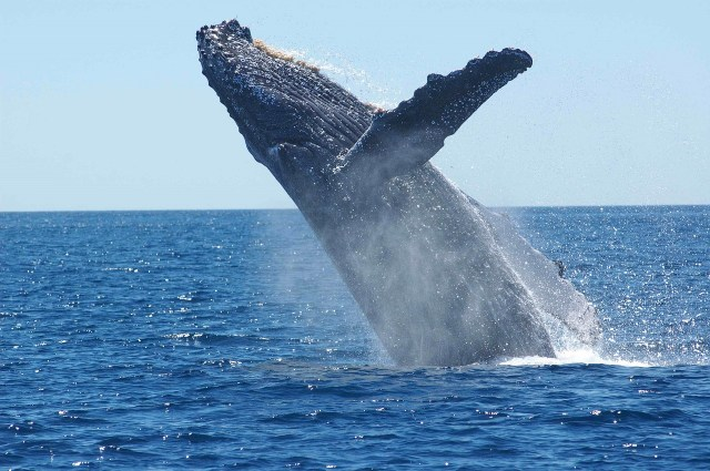 Whale pixabay
