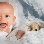 Suffering Of Polar Bears