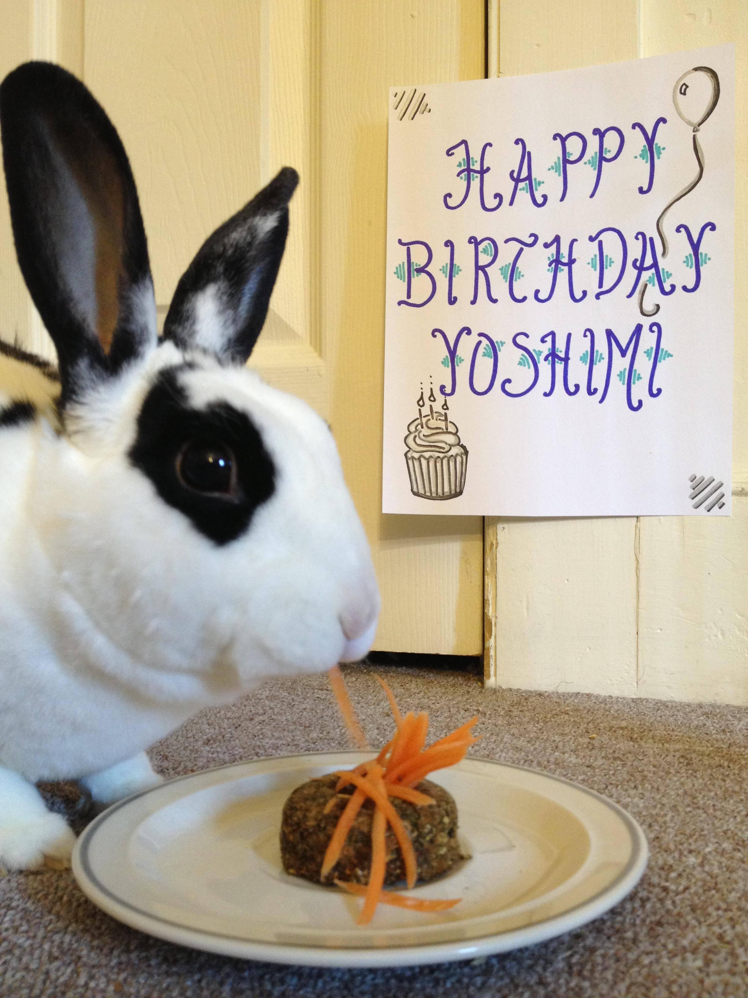 Monday Bunday Birthday Buns Bunny Eats Design