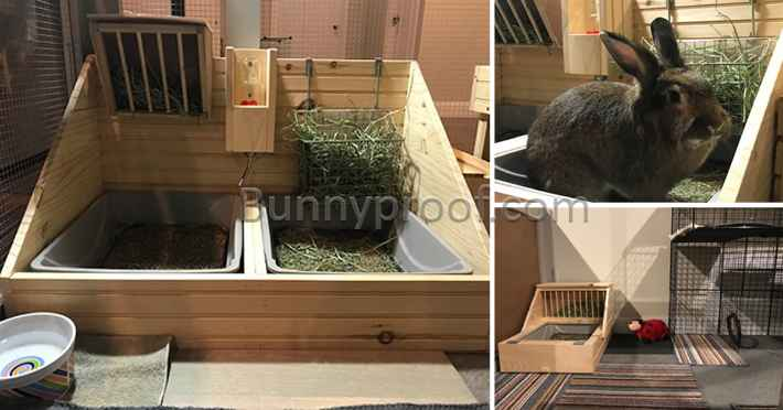 what should i put in my bunny enclosure