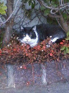 カーブの猫2